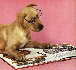 """The library is """"Paws""""itively looking forward to Summer Reading!!"""